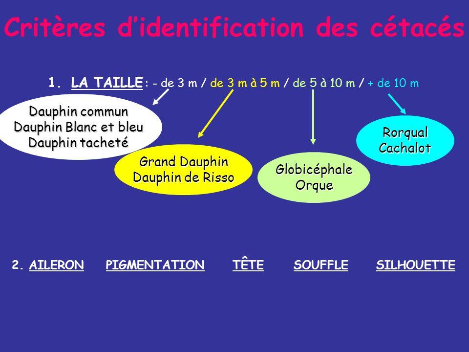 Critères d'identification des cétacés