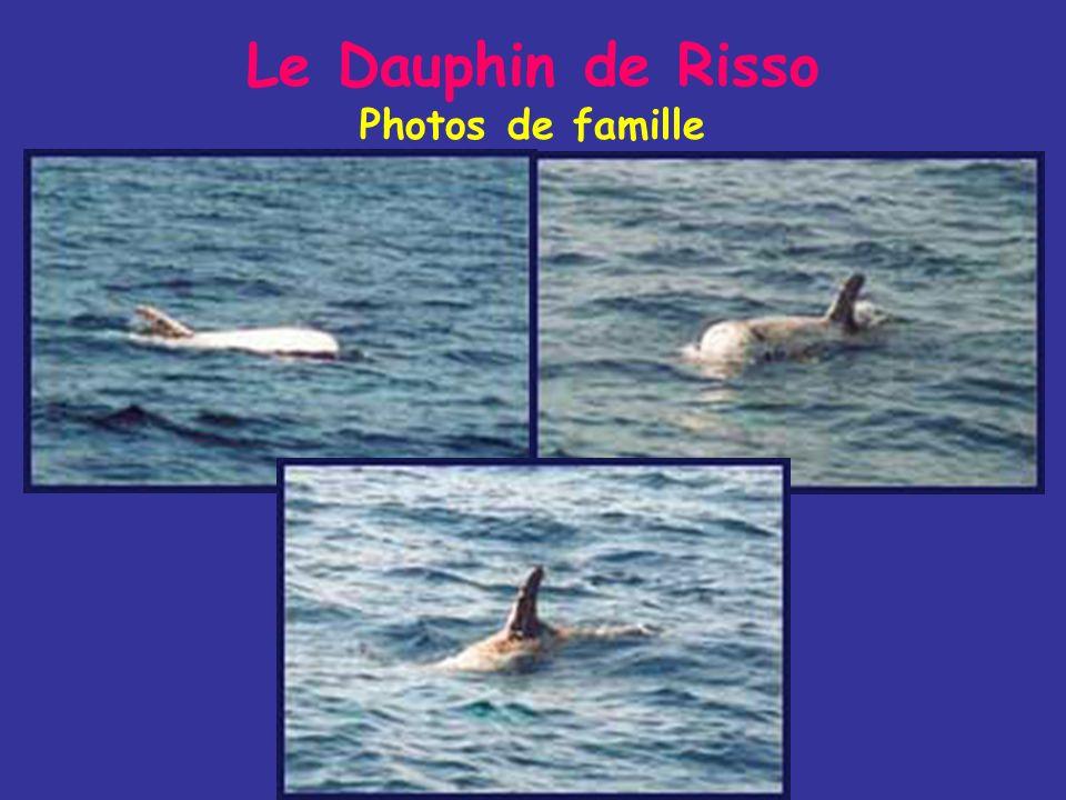 Le Dauphin de Risso Photos de famille