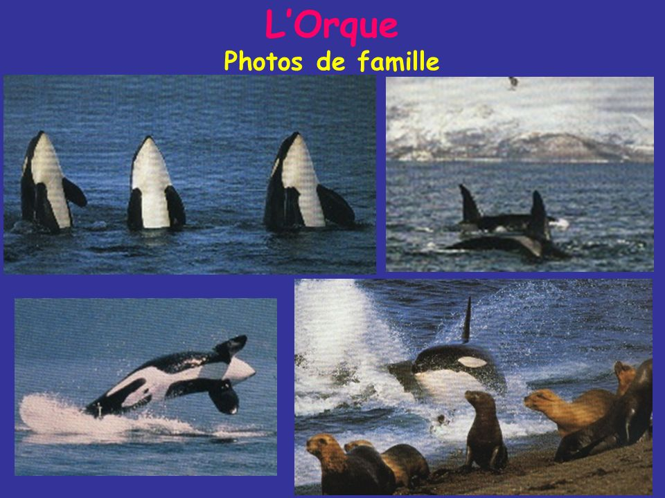 L'Orque Photos de famille