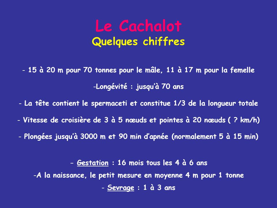Le Cachalot Quelques chiffres
