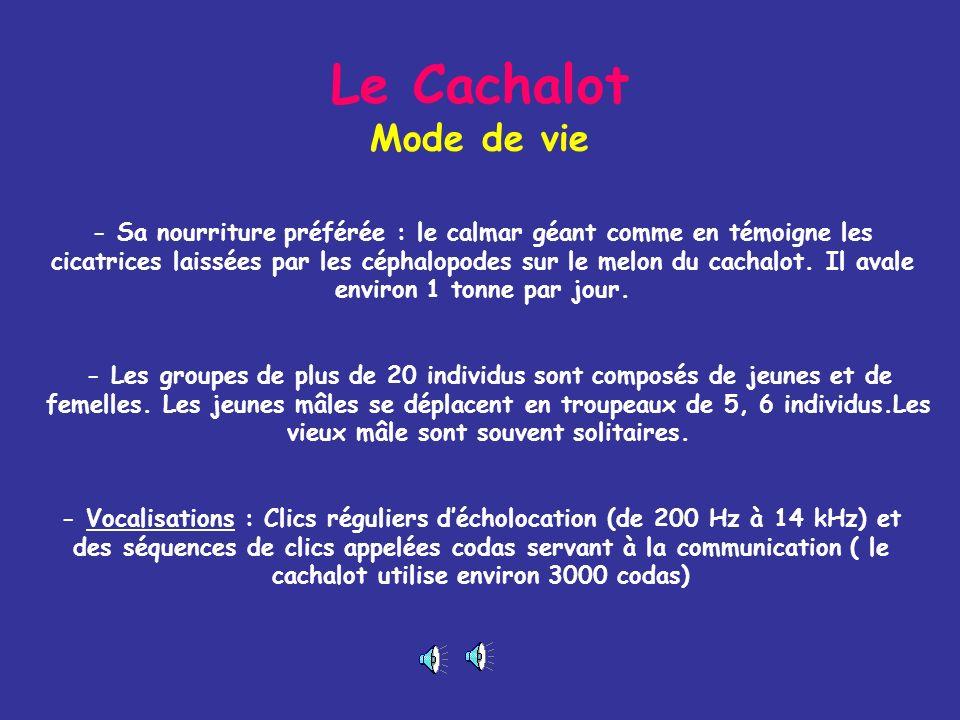 Le Cachalot Mode de vie
