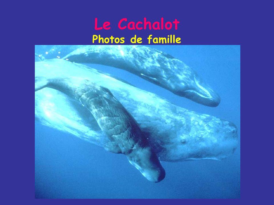 Le Cachalot Photos de famille