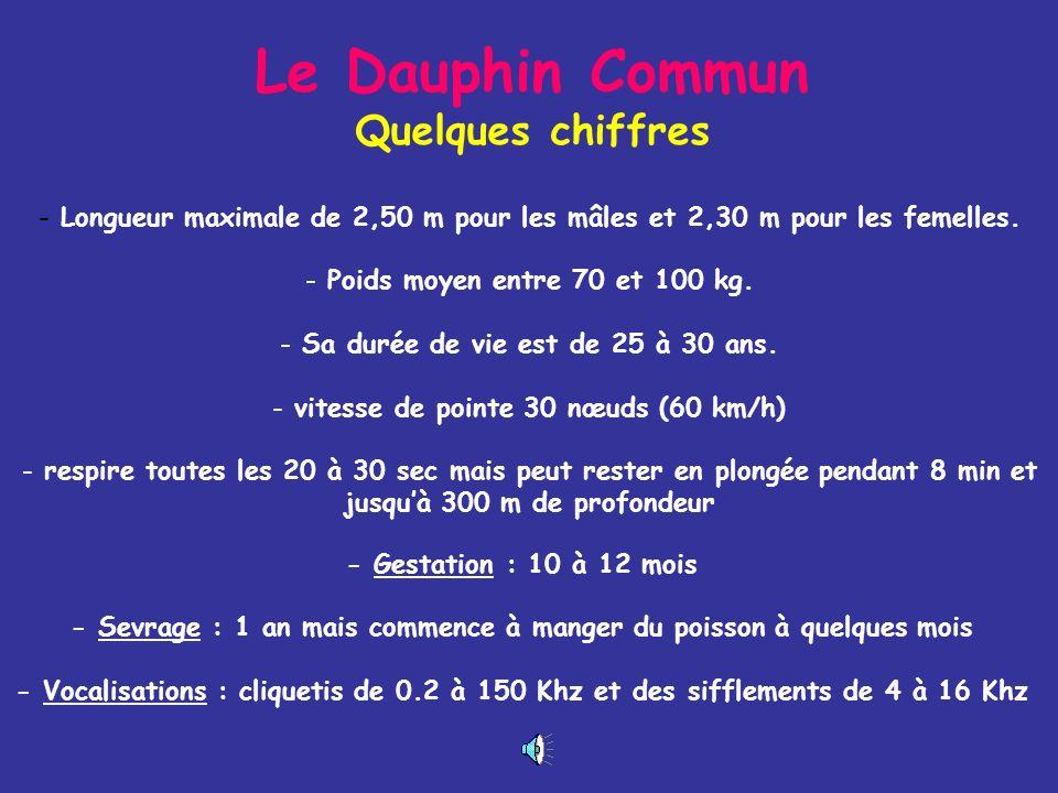 Le Dauphin Commun Quelques chiffres