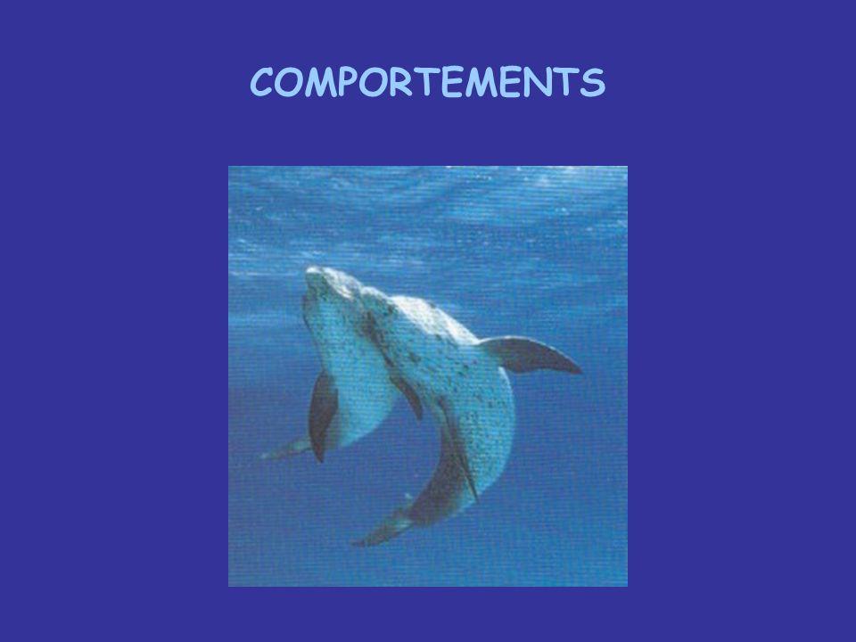 COMPORTEMENTS