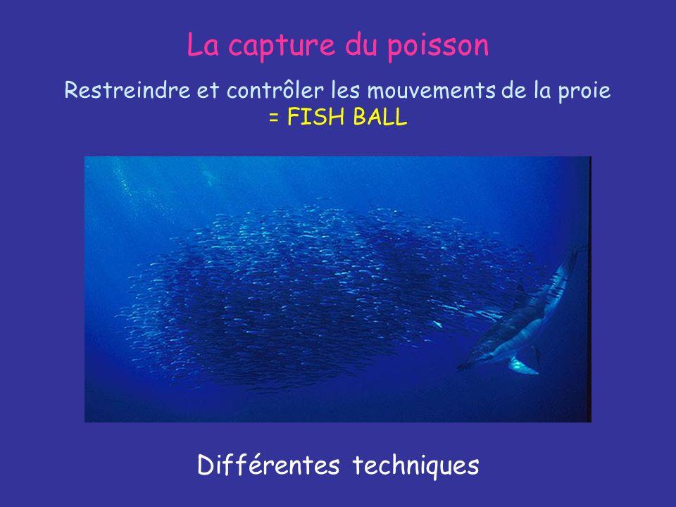 La capture du poisson Différentes techniques