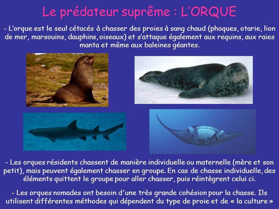 Le prédateur suprême : L'ORQUE