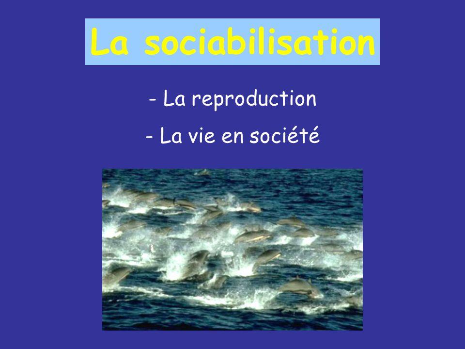 La sociabilisation La reproduction La vie en société