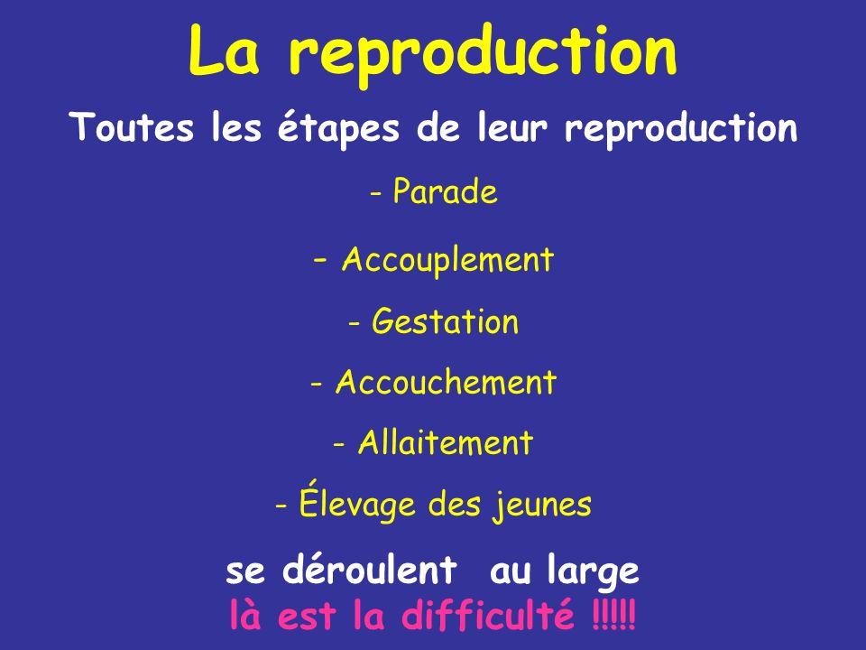 Toutes les étapes de leur reproduction