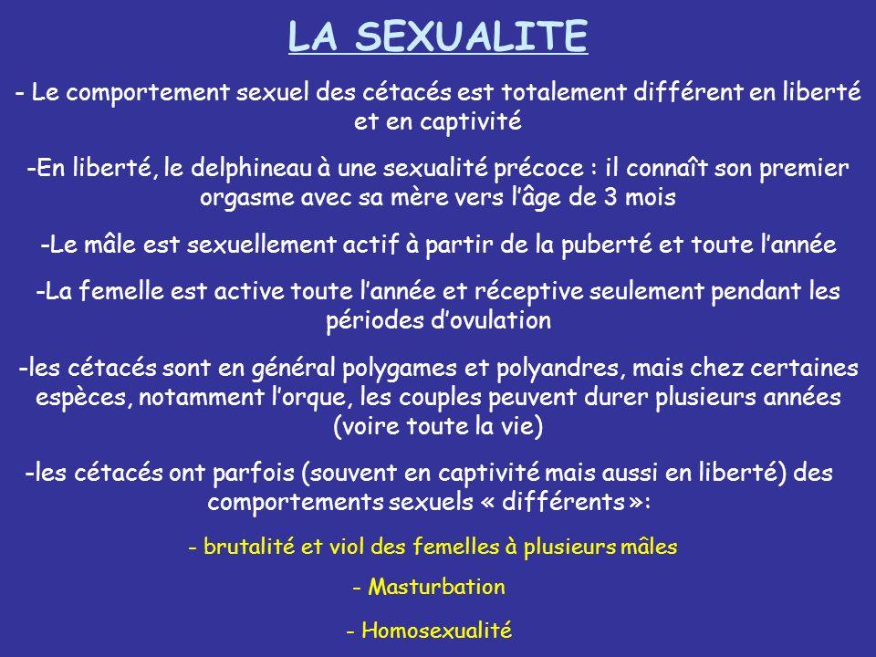 LA SEXUALITELe comportement sexuel des cétacés est totalement différent en liberté et en captivité.