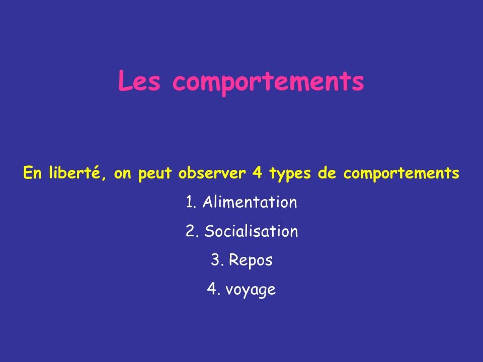 En liberté, on peut observer 4 types de comportements
