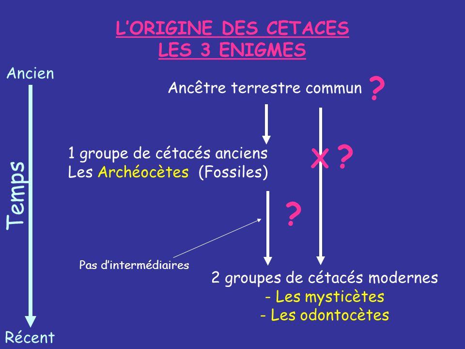 L'ORIGINE DES CETACES LES 3 ENIGMES