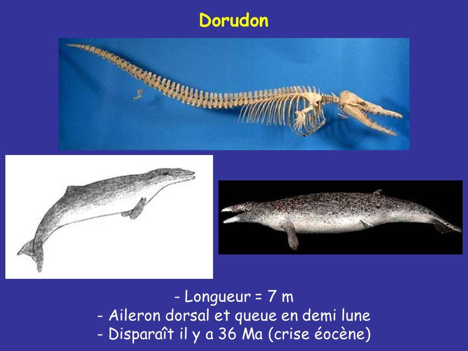 Dorudon
