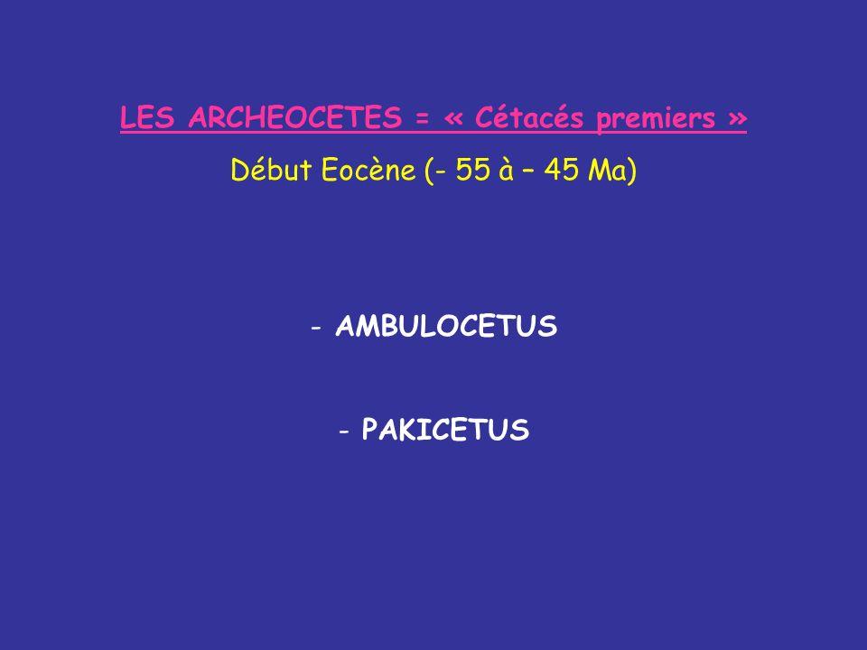 LES ARCHEOCETES = « Cétacés premiers »