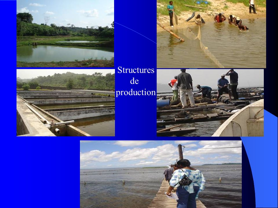 Structures de production
