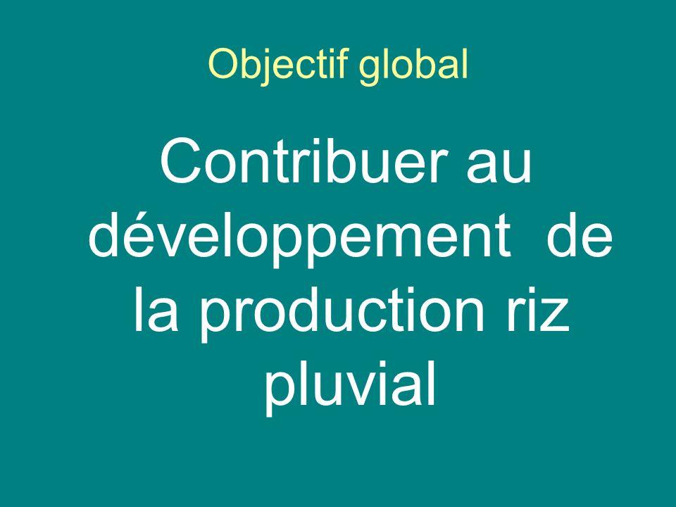 Contribuer au développement de la production riz pluvial