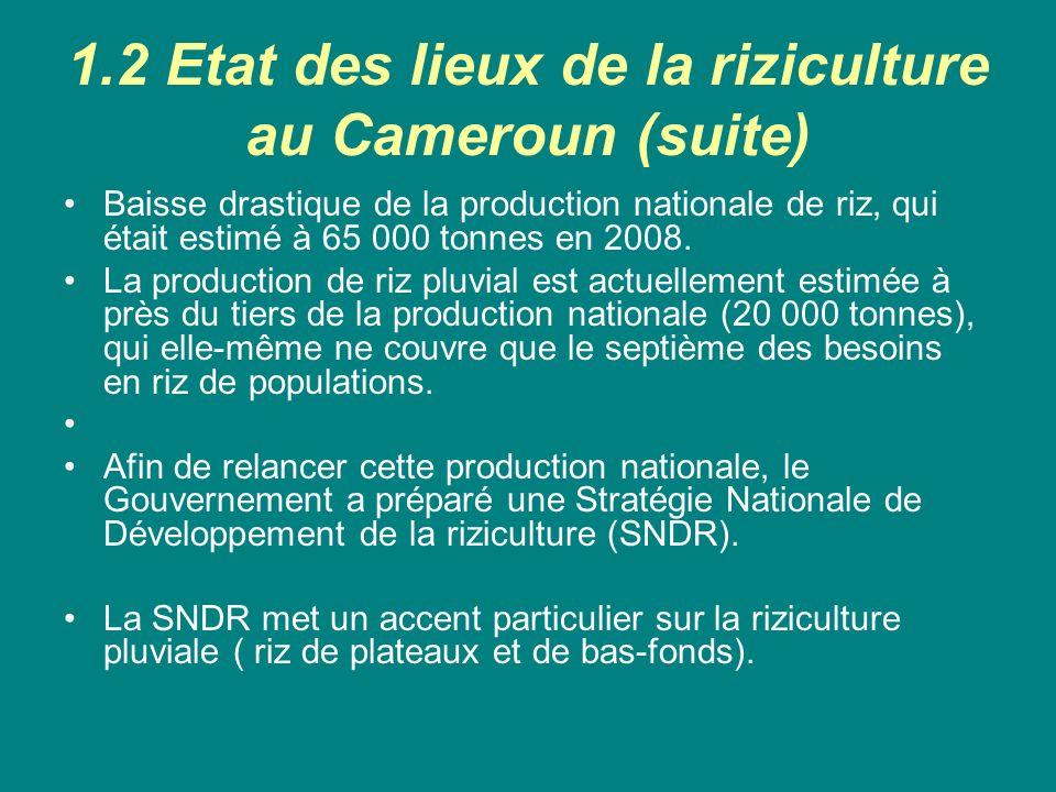 1.2 Etat des lieux de la riziculture au Cameroun (suite)