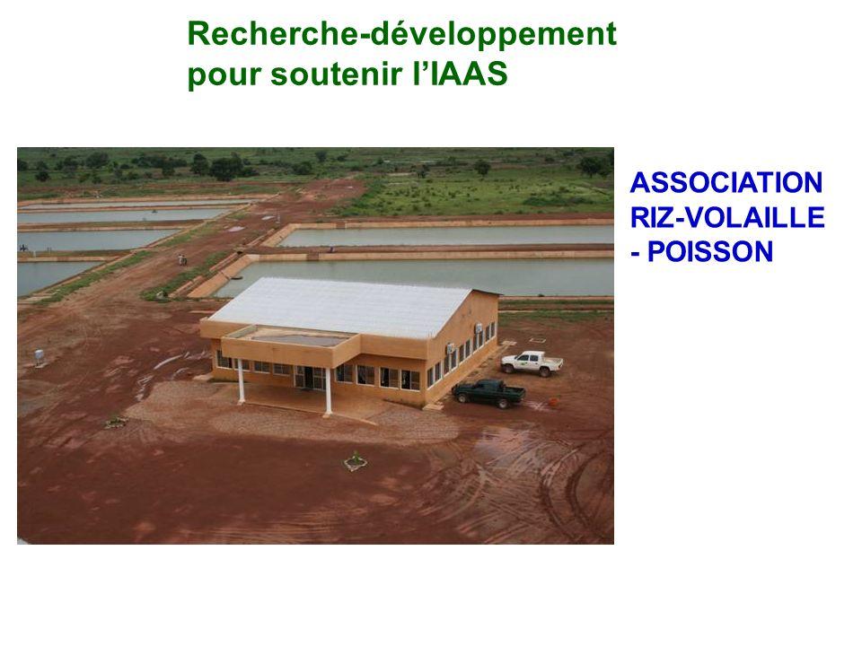 Recherche-développement pour soutenir l'IAAS