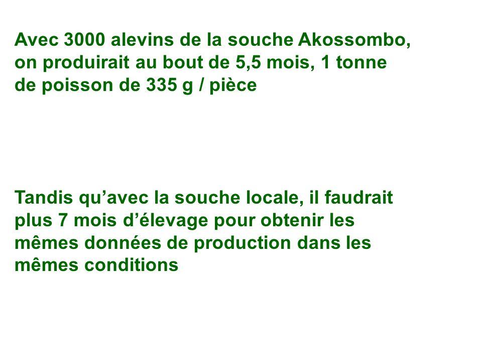 Avec 3000 alevins de la souche Akossombo, on produirait au bout de 5,5 mois, 1 tonne de poisson de 335 g / pièce