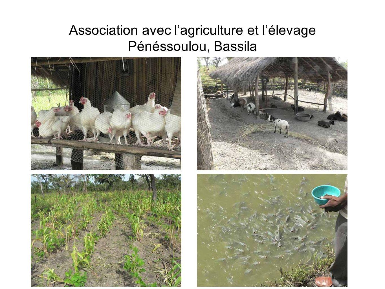Association avec l'agriculture et l'élevage