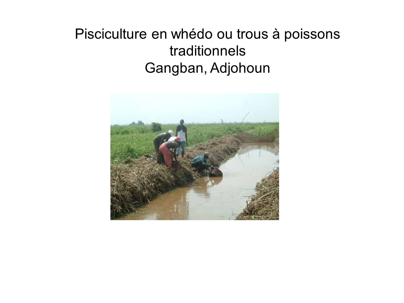 Pisciculture en whédo ou trous à poissons traditionnels