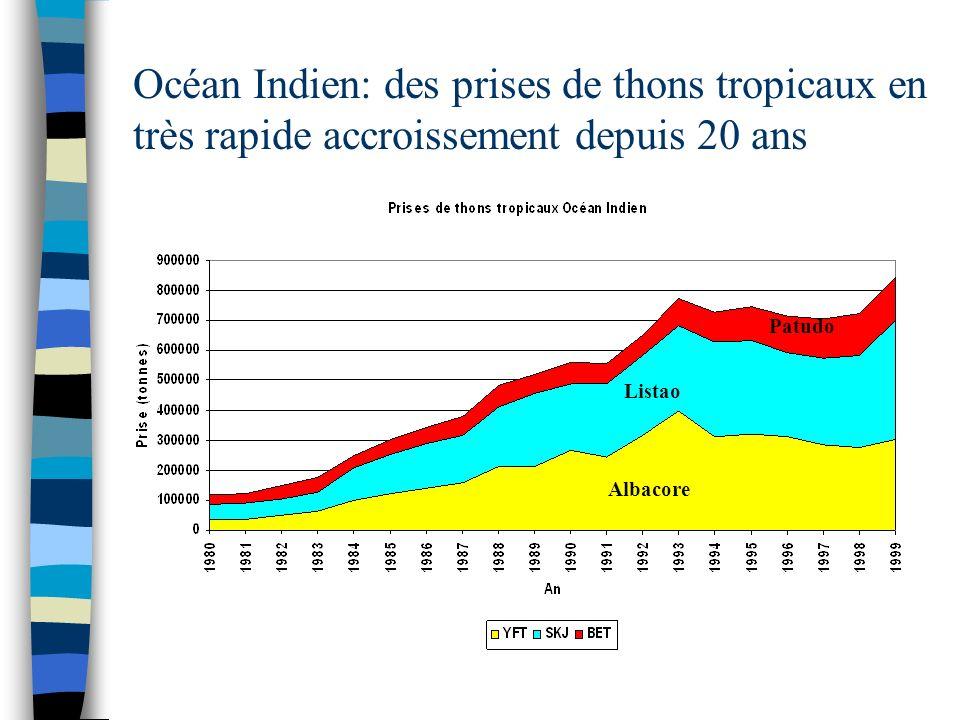 Océan Indien: des prises de thons tropicaux en très rapide accroissement depuis 20 ans