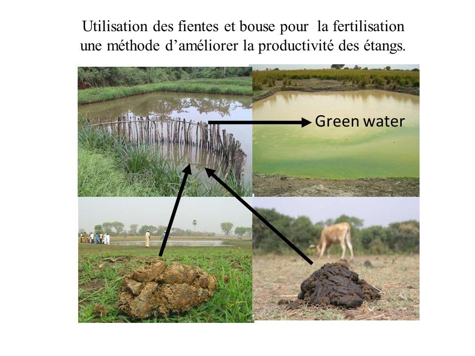 Utilisation des fientes et bouse pour la fertilisation une méthode d'améliorer la productivité des étangs.