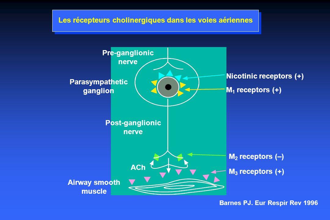 Les récepteurs cholinergiques dans les voies aériennes