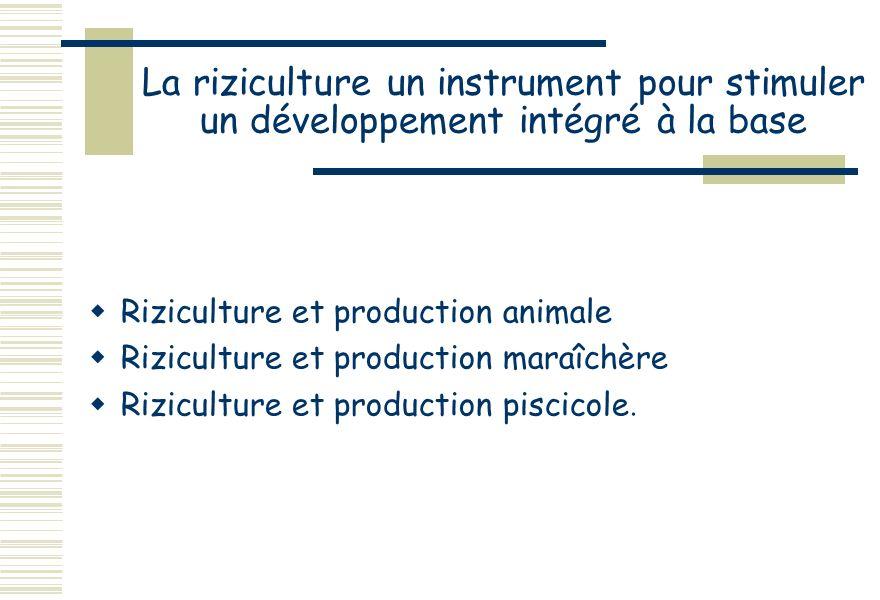 La riziculture un instrument pour stimuler un développement intégré à la base