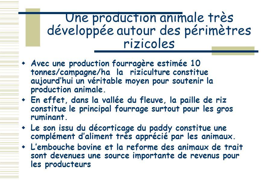 Une production animale très développée autour des périmètres rizicoles