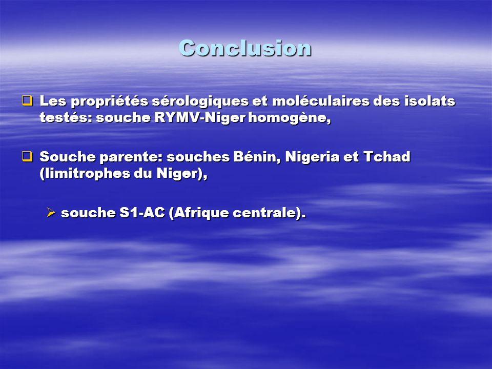 Conclusion Les propriétés sérologiques et moléculaires des isolats testés: souche RYMV-Niger homogène,