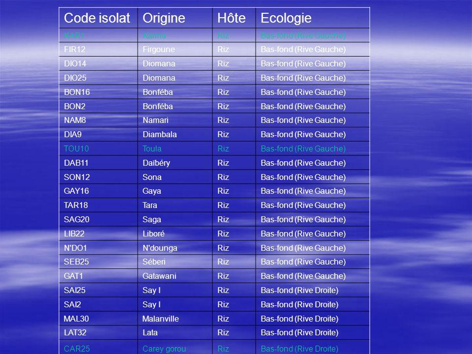 Code isolat Origine Hôte Ecologie KAR1 Karma Riz