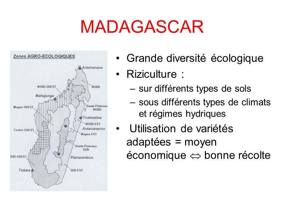 MADAGASCAR Grande diversité écologique Riziculture :