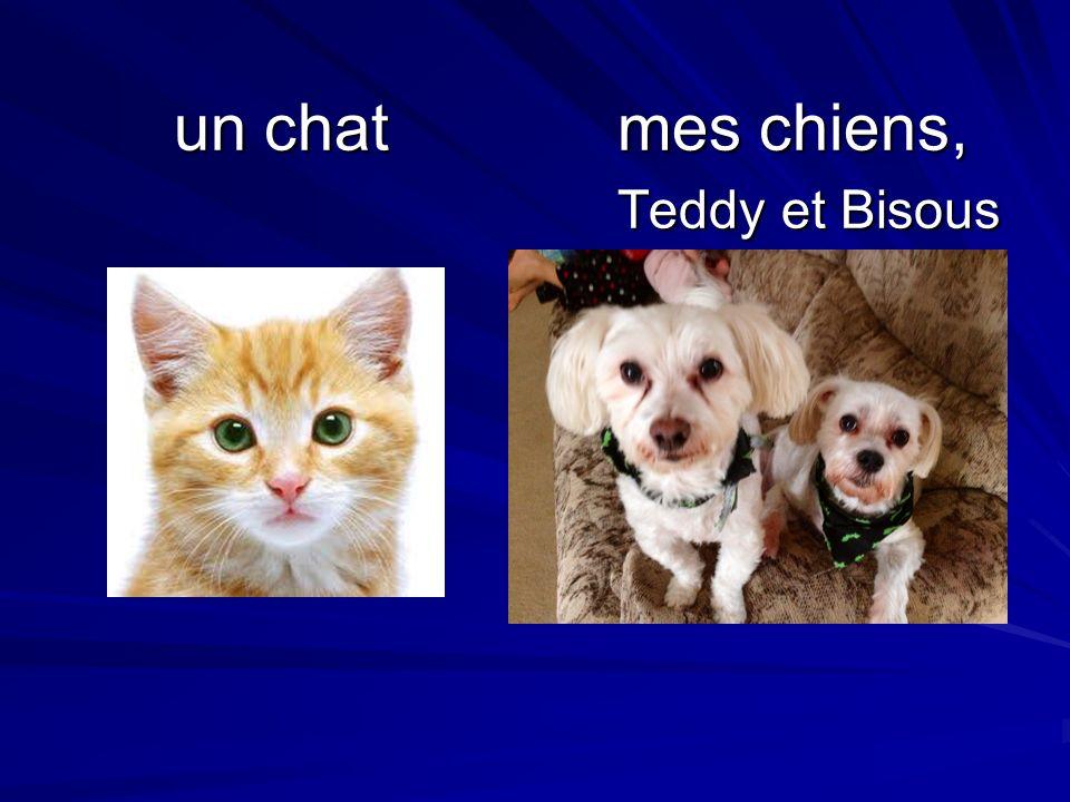 un chat mes chiens, Teddy et Bisous