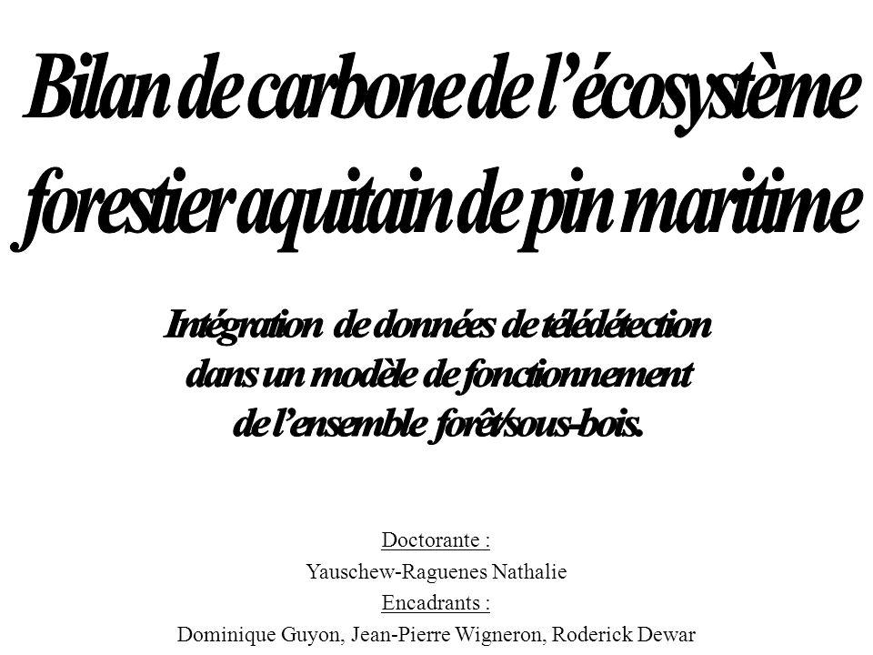 Bilan de carbone de l'écosystème forestier aquitain de pin maritime