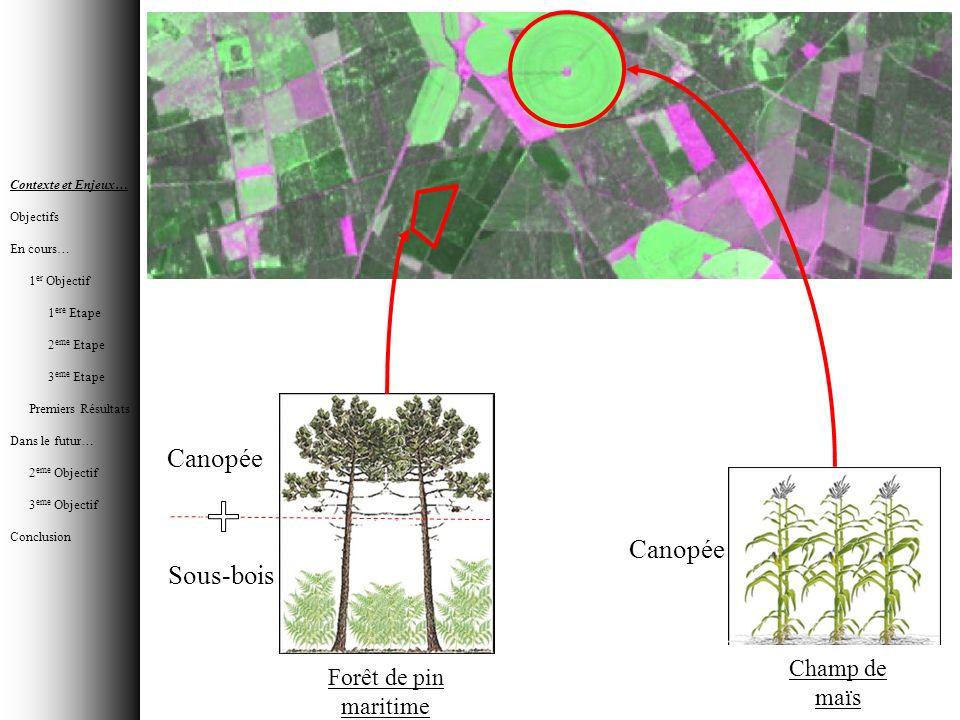 Canopée Canopée Sous-bois Champ de maïs Forêt de pin maritime