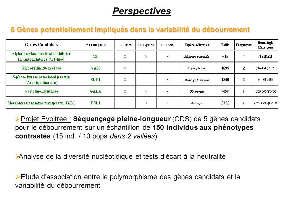 Perspectives 5 Gènes potentiellement impliqués dans la variabilité du débourrement.