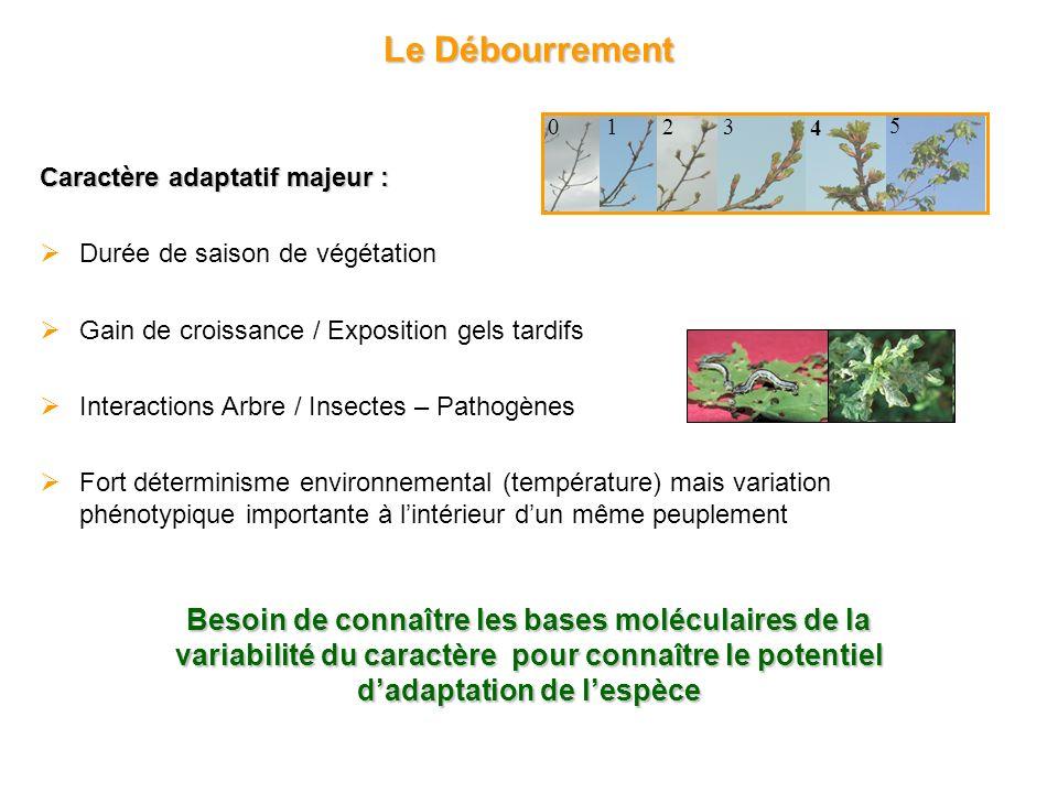 Le Débourrement 2. 1. 4. 3. 5. Caractère adaptatif majeur : Durée de saison de végétation. Gain de croissance / Exposition gels tardifs.