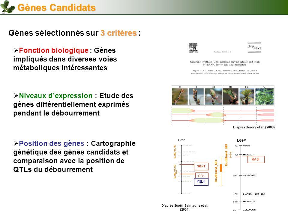 D'après Scotti-Saintagne et al. (2004)