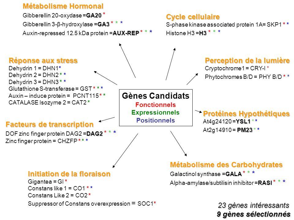 23 gènes intéressants 9 gènes sélectionnés