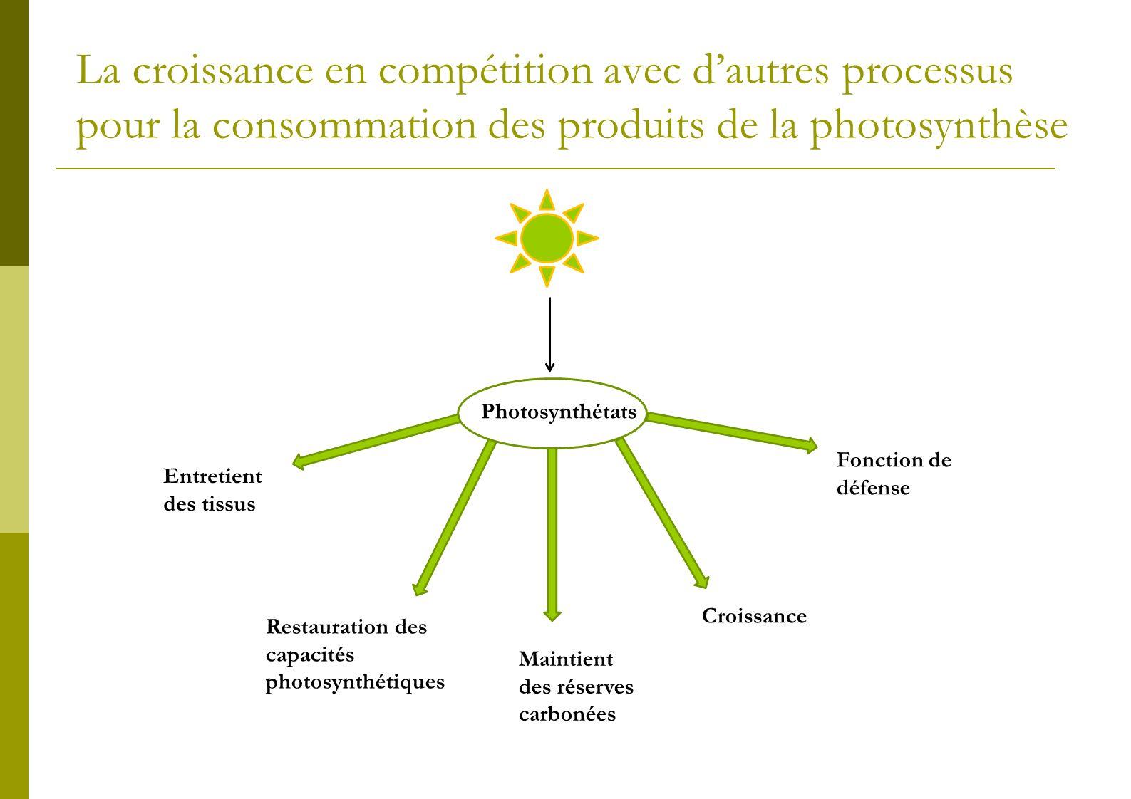 La croissance en compétition avec d'autres processus pour la consommation des produits de la photosynthèse