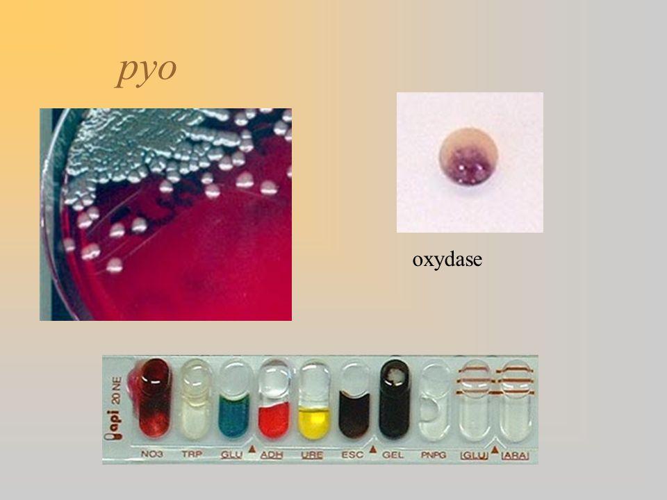 pyo oxydase