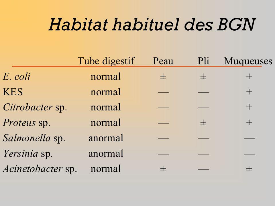 Habitat habituel des BGN
