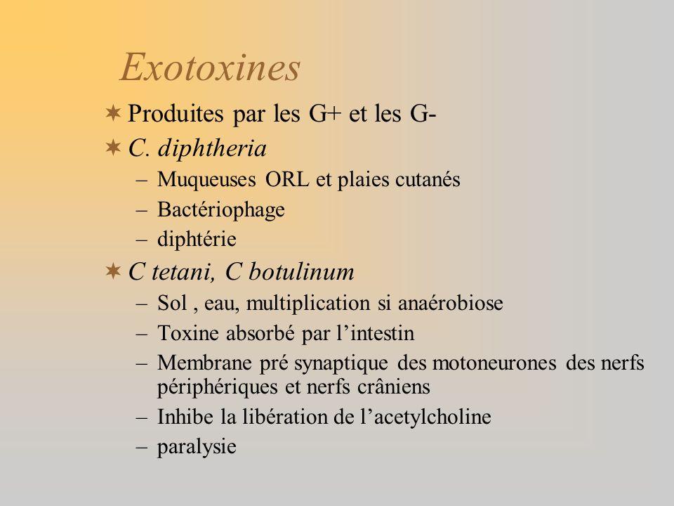 Exotoxines Produites par les G+ et les G- C. diphtheria