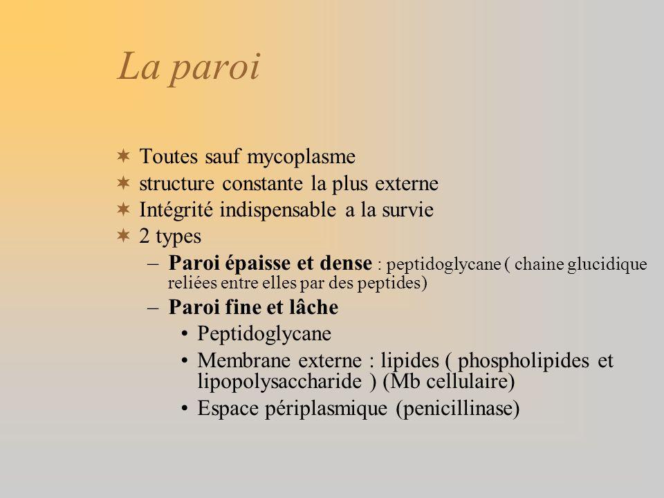 La paroi Toutes sauf mycoplasme structure constante la plus externe