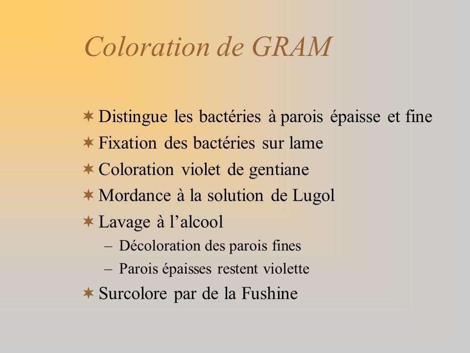 Coloration de GRAM Distingue les bactéries à parois épaisse et fine
