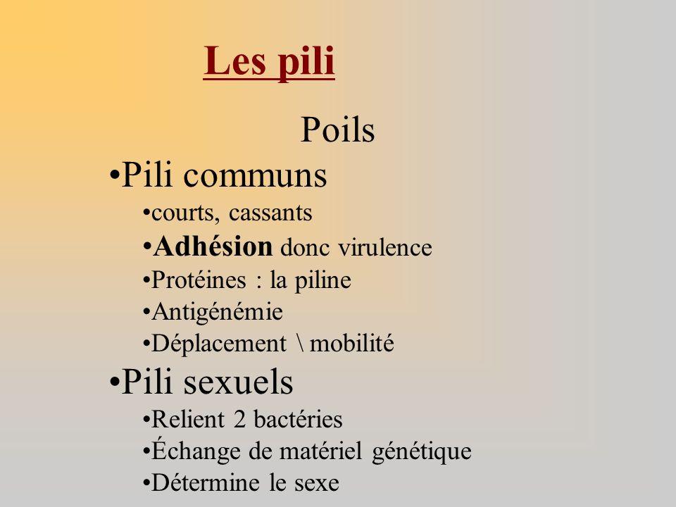 Les pili Poils Pili communs Pili sexuels Adhésion donc virulence