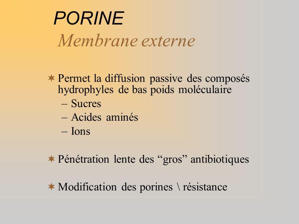 PORINE Membrane externe