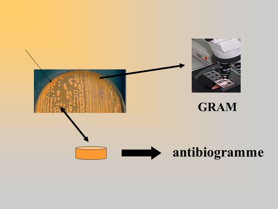 GRAM antibiogramme