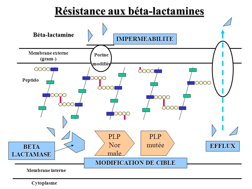 Résistance aux béta-lactamines