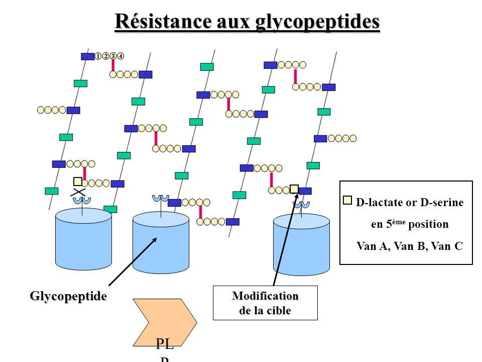 Résistance aux glycopeptides